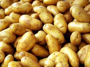 lowienie-na-ziemniaka