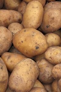 ziemniak-przyneta