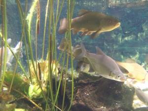 ryby-spokojnego-zeru