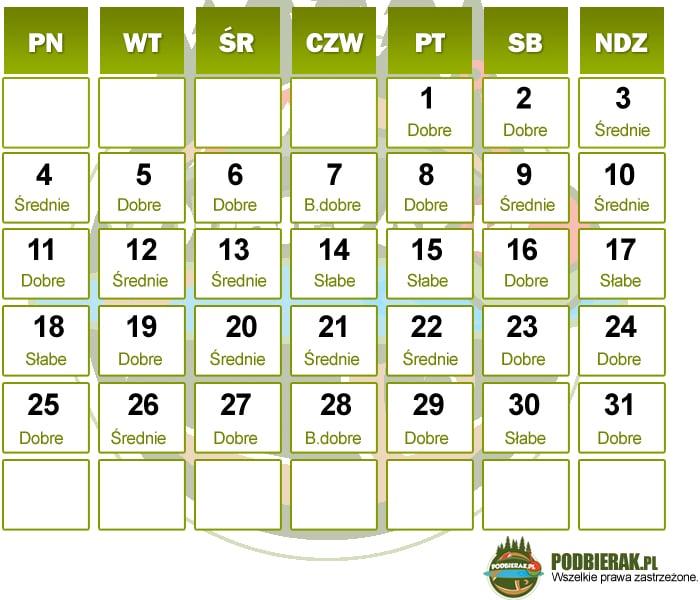 Kalendarz brań sierpień 2014